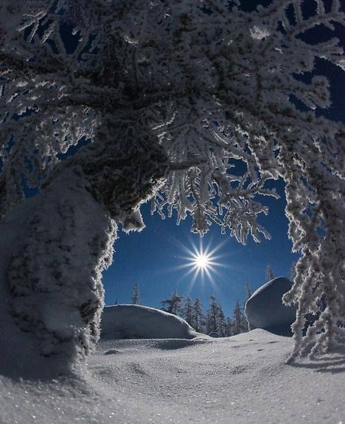 Moon And Winter
