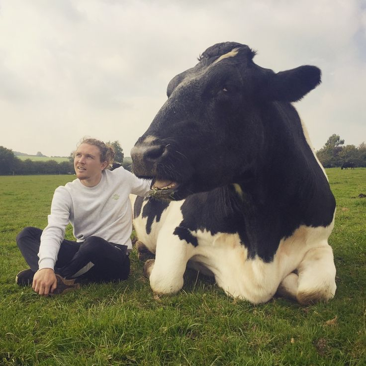 Tim Shieff and his cow buddy :D