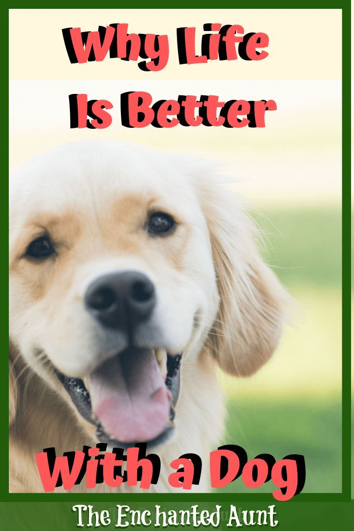 10 Reasons Why Your Life Will Improve By Owning A Dog Dogs