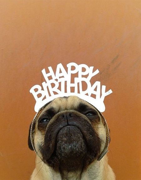 Norm Pug Happy BIrthday