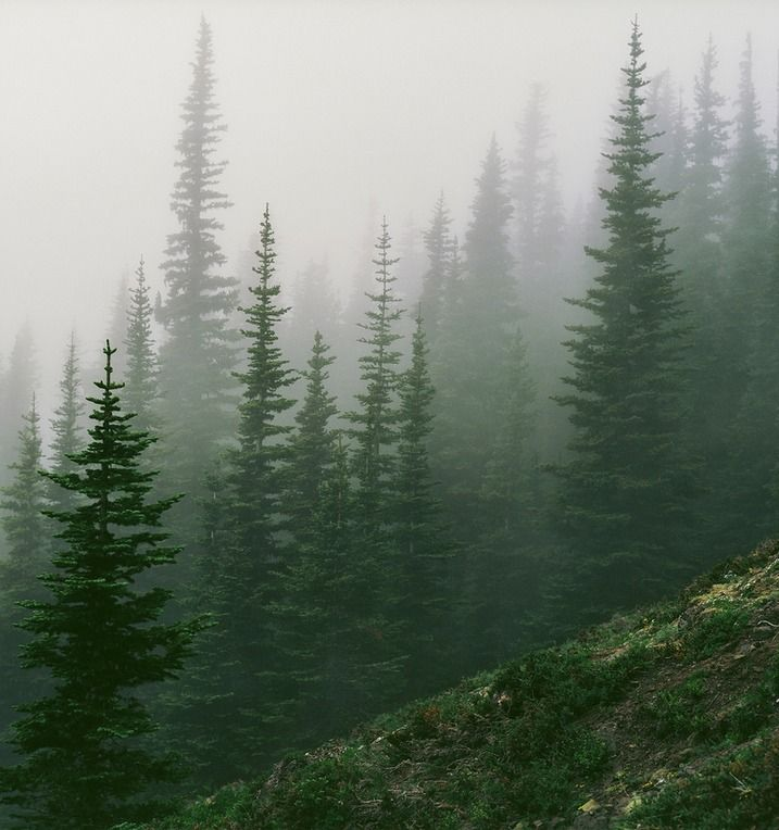 Olympic Mountains (by Trevor Ducken)