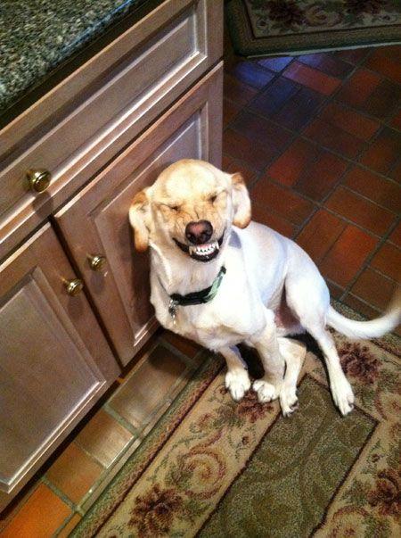 Photogenic dog