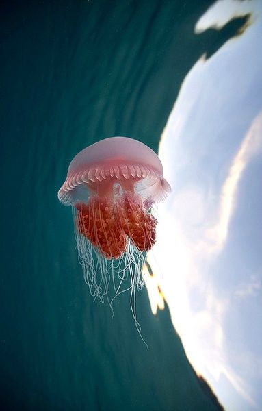 Jelly fish!!!!!!!!!!!!!!!!!!!!!!!                                                                                                                                                                                 Más