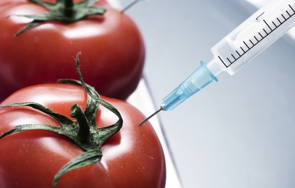 Les OGM sont de véritables poisons, selon une étude française