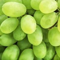 Výtažek z hroznových jader - významný antioxidant