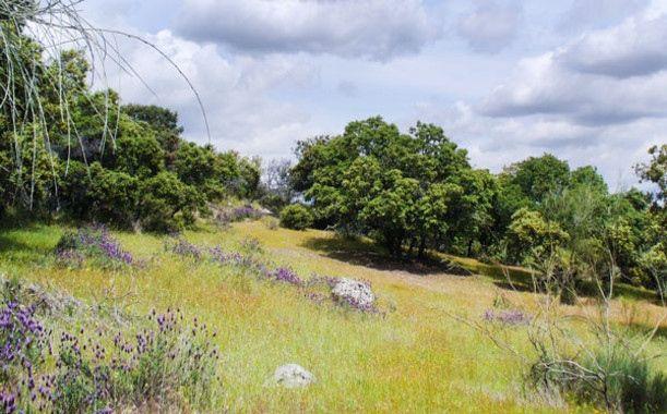 Cambio Climático: La ecología del suelo influye en los ciclos del carbono y el nitrógeno — Noticias de la Ciencia y la Tecnología (Amazings®  / NCYT®)