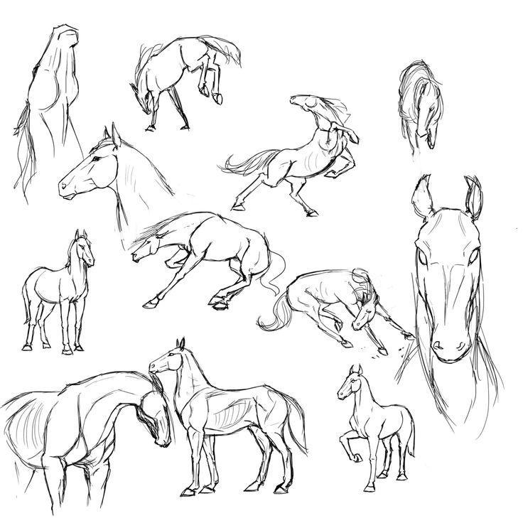 54 besten Horse Anatomy Bilder auf Pinterest | Pferde, Einhörner und ...