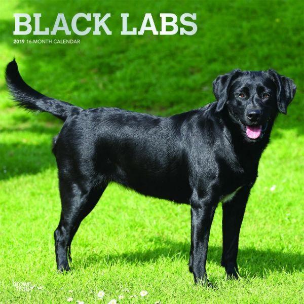 Black Labrador Retrievers 2019 Wall Calendar Black Labrador