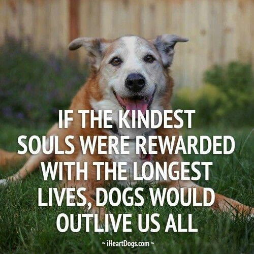 If the kindest souls were rewarded with the longest lives, dogs would outlive us all.: