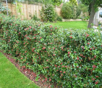 119 best hedging and border ideas images on pinterest gardening 119 best hedging and border ideas images on pinterest gardening garden layouts and landscaping workwithnaturefo
