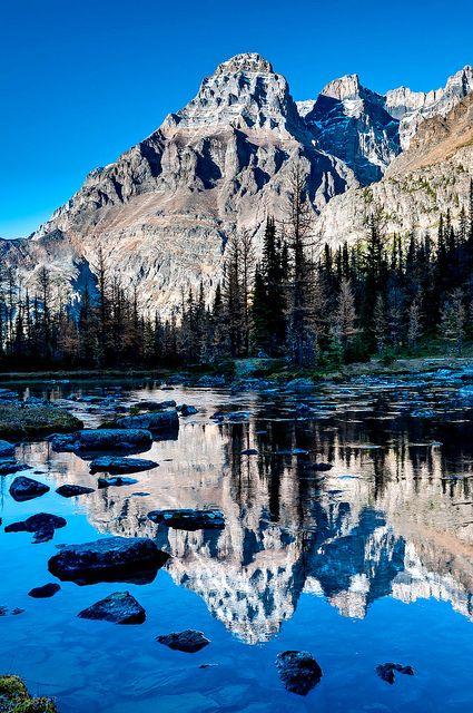 Near Lake O'Hara in Yoho National Park, British Columbia, Canada. Let's go next summer!