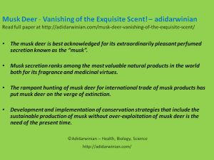 http://adidarwinian.com/musk-deer-vanishing-of-the-exquisite-scent/ This paper/article focuses on the exquisite musk secretion, uses of musk both as a perfume and medicine, production of musk, trade of musk, and taxonomy, distribution and threatened status of musk deer.