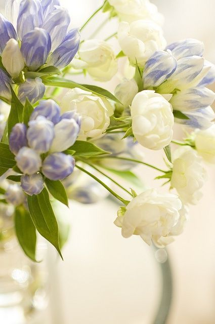 blue and white blooms