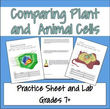 lab 2 animal and plant cells Activity is the teaching portion of the unit that focuses on the characteristics of plant and animal cells the third activity is the lab  animal and plant cells.
