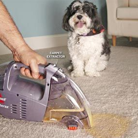 Many pet owners do exactly what they shouldn't do when they clean up pet messes. But if you learn how to clean up the right way, with the right products, you can prevent a permanent stain.