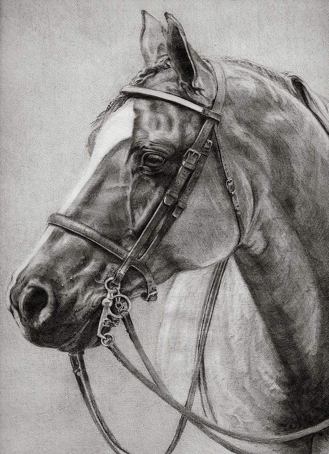 Hunt Seat Quarter Horse Print by Sara Cuthbert