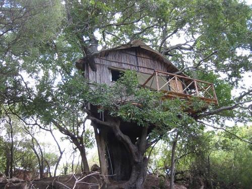 Kruger Treehouse safari Accommodation  http://www.krugertours.com/kruger-treehouselodge.htm