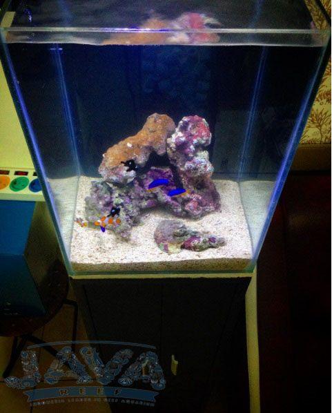 model aquarium air laut