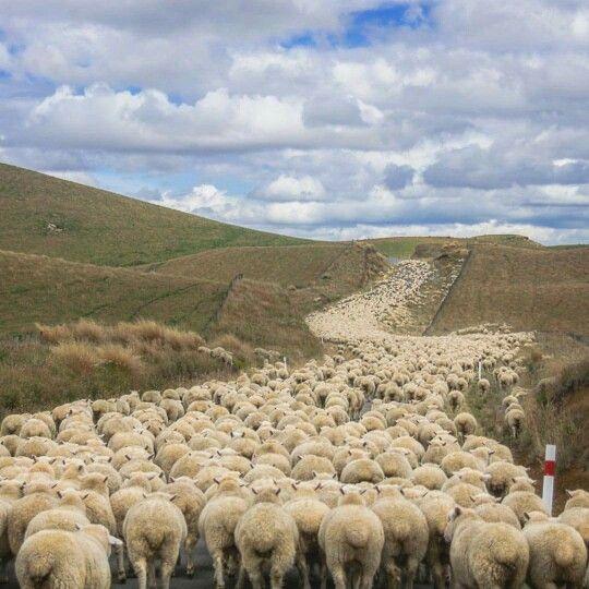 Traffic hazard in New Zealand!