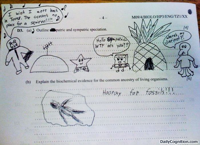 hilarious essay answers