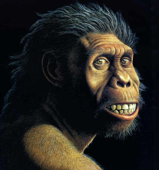 hominin and humans essay Get expert essay editing help  build your thesis statement  log in search  hominids essay examples 6 total results an introduction to the analysis of bipedalism in africa  an overview of the homebase hypothesis by glynn isaac 2,580 words 6 pages a history of bipedalism in humans 886 words 2 pages an introduction to the.
