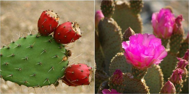 Riego y abono de los cactus: ¡Lo que necesitas saber!