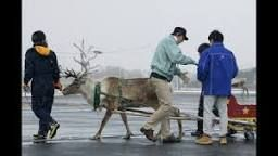 Reindeer Pizza Delivery Service?