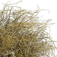 $160 Curly Willow (300 stems) - Sam's Club