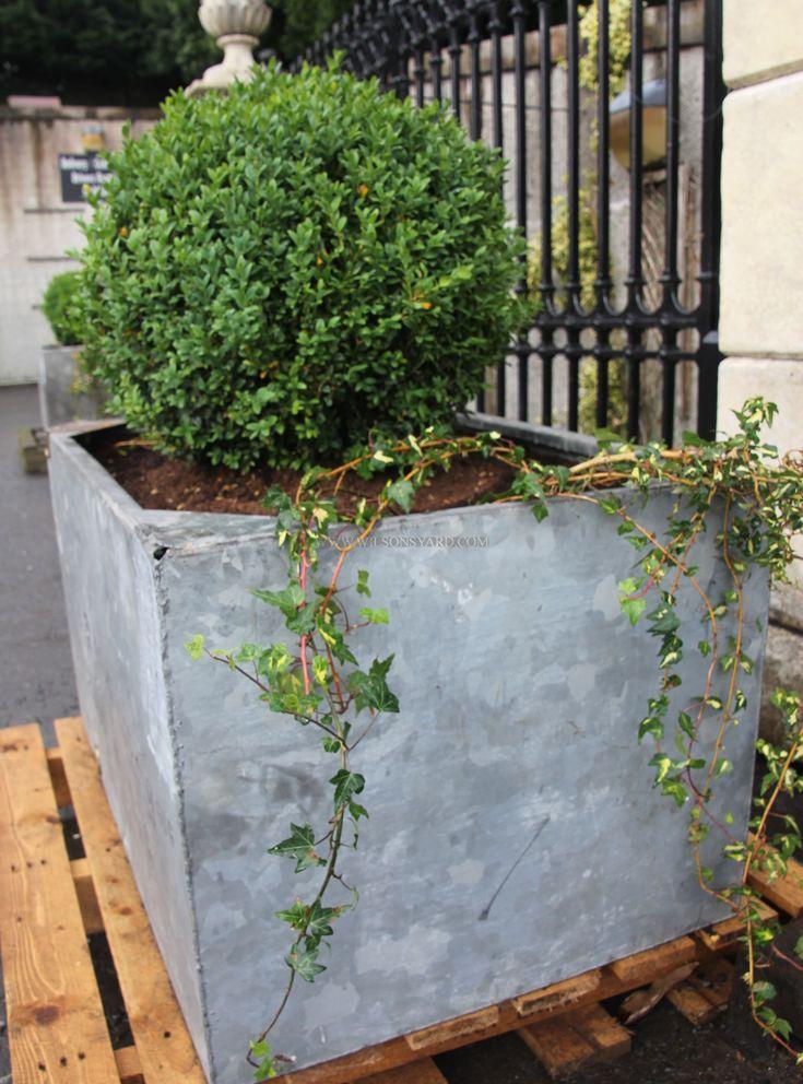 Pair of galvanised garden tank planters | Wilsonsyard.com