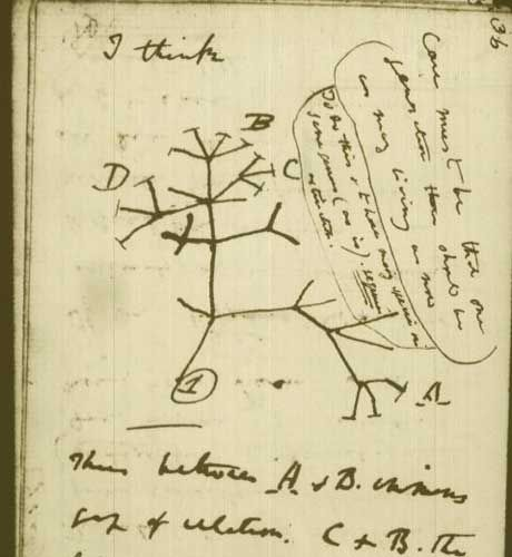 "A page from Darwin's ""tree of life"", which shows how species are related through evolutionary history, is wrong and needs to be replaced, according to leading scientists. Darwin first sketched how species might evolve along branches of an imaginary tree in 1837, an idea that quickly came to symbolize the theory of evolution by natural selection."