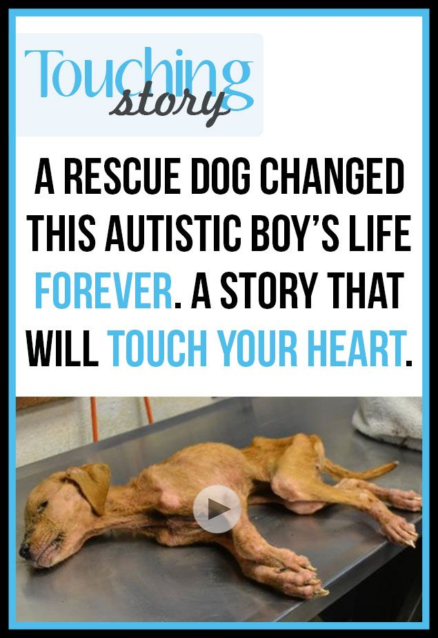 Such a beautiful story of how a dog near death and an autistic boy rescue each other. #autism #pets