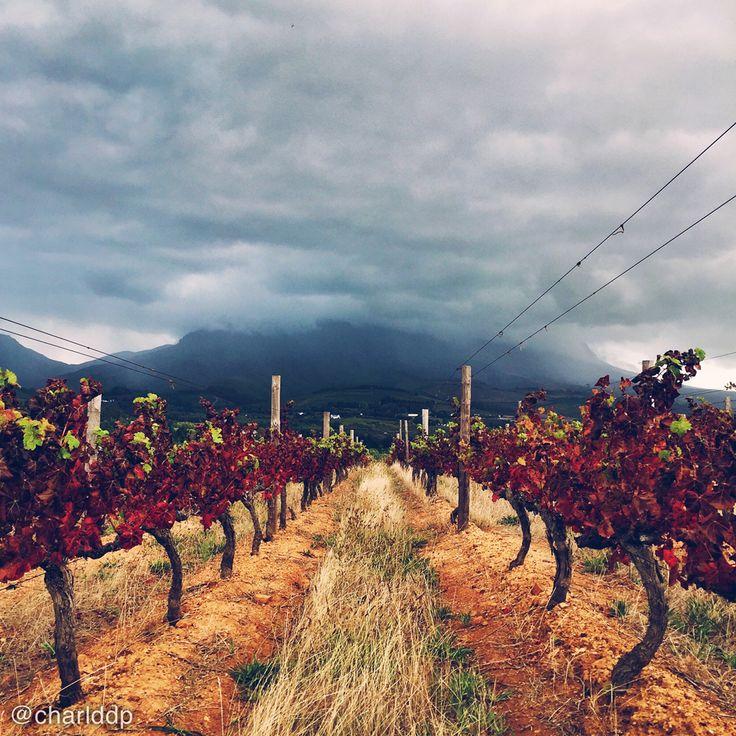 Moody mountain // Stellenbosch vineyards. Photo by http://instagram.com/charlddp