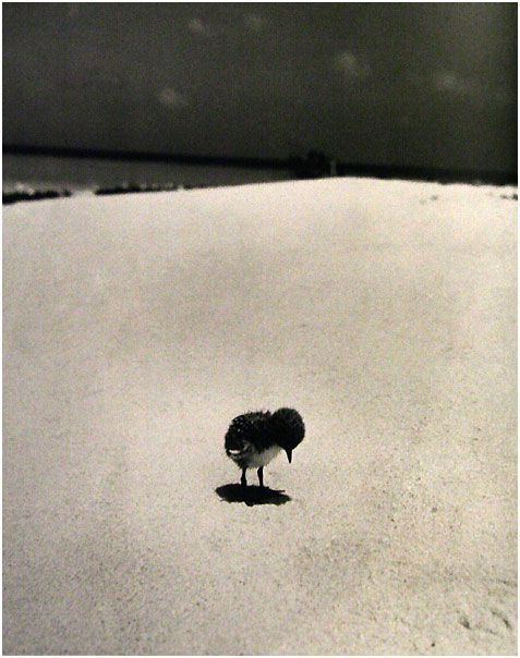 Grande Barriera Corallina, Australia, 1950, by Fritz Goro