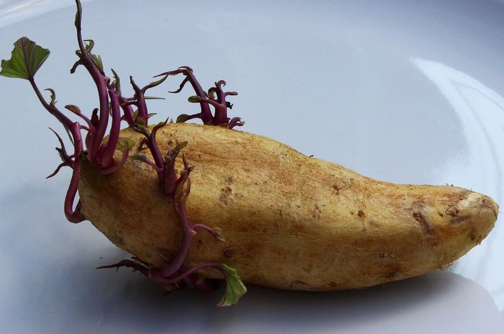 If You Notice THIS On Your Potatoes, Don't Eat Them. It May Kill You