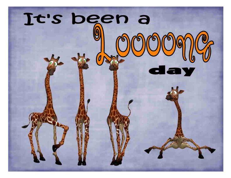 Custom Made T Shirt Been A Long Day Giraffes Funny Hilarious Humorous