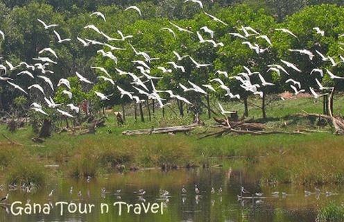koloni burung di pulau dua (pulau burung) - banten