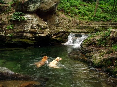 Swimming holes for dogs in pa