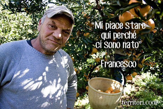 """Francesco: """"Mi piace stare qui perchè ci sono nato"""" #territori #sicilia #ciaculli #palermo #agrumi #mandarini"""