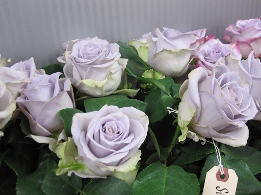 Silverstone Roses - perfect for purple/silver wedding