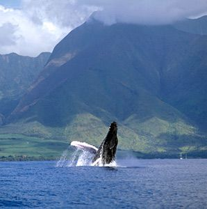 North America's Best Whale-Watching Spots- Page 2 - Articles | Travel + Leisure