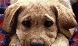 CoolPetZ | Social Pet Network Yavru köpekler ve yetişkin köpekler birbirlerinden çok daha farklı sebeplerden ötürü ağlayabilirler... #köpek #CoolPetZ