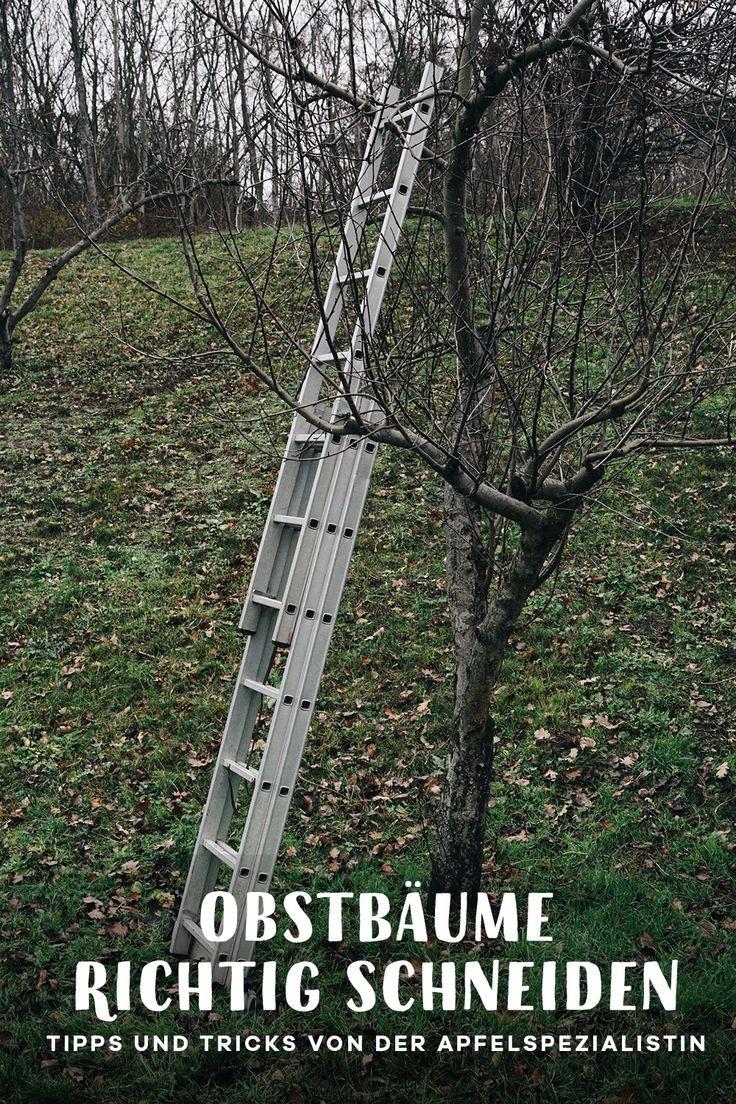 """Alten Obstbaum richtig schneiden + Verlosung von zwei Jahreskarten """"Die Pflanztastischen 4"""