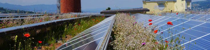 Bio Solar Roof Project