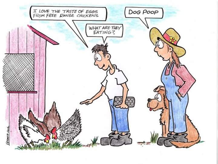 Chicken Jokes For Adults: 648 Best Images About CARTOON FUNNIES On Pinterest