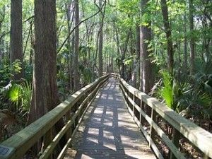 Best Scenic Walking Trails Around Delray Beach   digital media arts college   www.dmac.edu   561.391.1148
