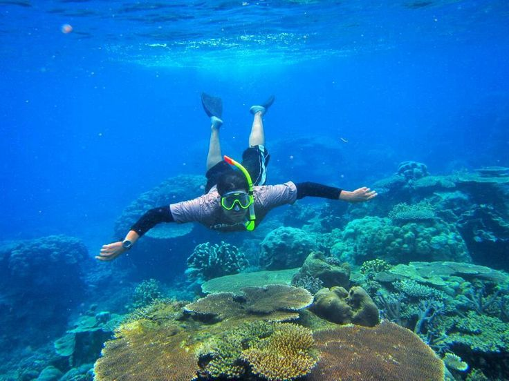 Hutan Tropis di dasar laut.  Terumbu karang berasal dari dua kata yaitu Terumbu dan Karang. Karang merupakan hewan laut yg bertahan hidup dengan memakan zooplankton yg dibawa oleh arus yang menghasilkan terumbu yaitu struktur kalsium carbonat (CaCo3)/ coral reef. Terumbu karang diperkirakan mengalami pertumbuhan paling cepat 5cm/tahun dengan kondisi air laut bening dan terdapat cahaya matahari.  Jadi teringat kasus Kapal pesiar MV Caledonian Sky yang berbendera Bahama dan dinahkodai Kapten…