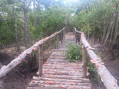 Fungus bridge.