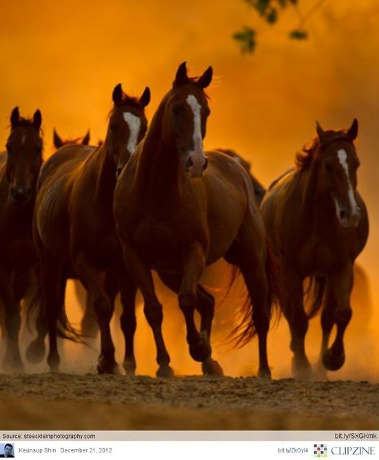 horses on orange background #animals, #pets, #cute, #funny
