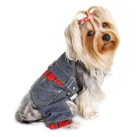 We offer designer dog clothes and accessories. Shop our large selection of dog clothes, dog carriers, dog accessories, and dog costumes