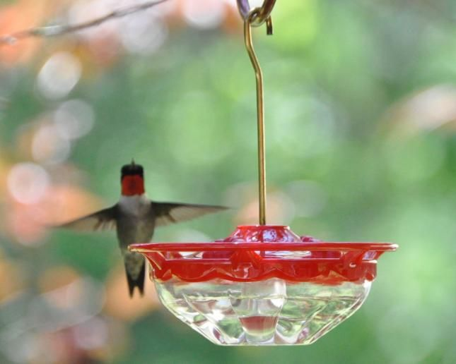 Don't use nectar with red dye for hummingbirds. Here's a simple two ingredient recipe to make nectar. Also, empty and clean feeders often to avoid mold.